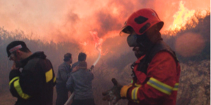ICEJ: Carmel Fires